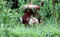 July 30, 2012 - One of many fire hydrants that are being covered with weeds and brush, this one is on East Main Street.© Dick Bartlett