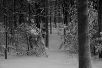 Snow in the woodsPhoto by Michelle Murdock