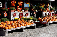 September 25, 2012 - Pumpkins on display and are for sale at Evergreen Haven on West Main Street.© Dick Bartlett