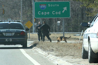 March 11, 2012 - State and local police searched the Woods near West Main and South Street for a driver that fled from the State Police after a traffic stop. Dick Bartlett