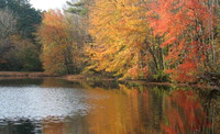 "October 24, 2011 - Foliage on the shores of the old "" firehouse "" pond in Woodville.© Dick Bartlett"
